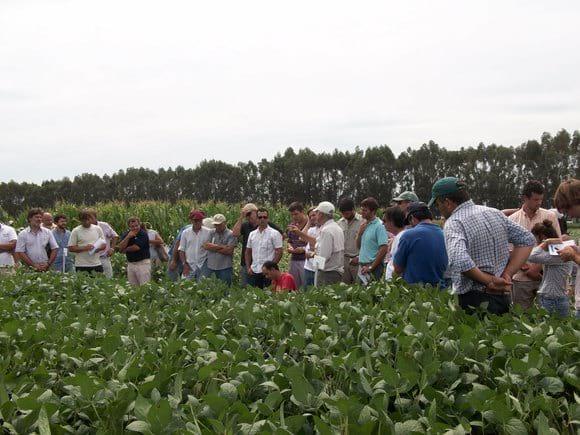 Jornada de soja y maíz - Jornadas de campo