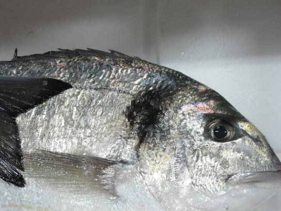 Sea-bream - Various