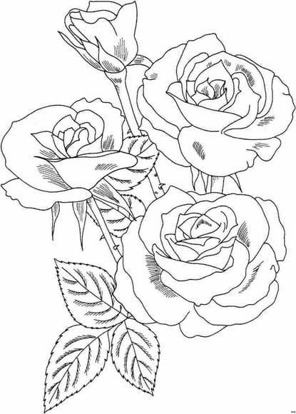 rosas - Varias