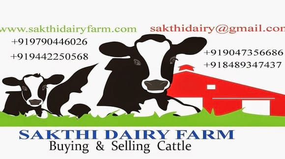 Dairy Farm - sakthi dairy farm cow supplier