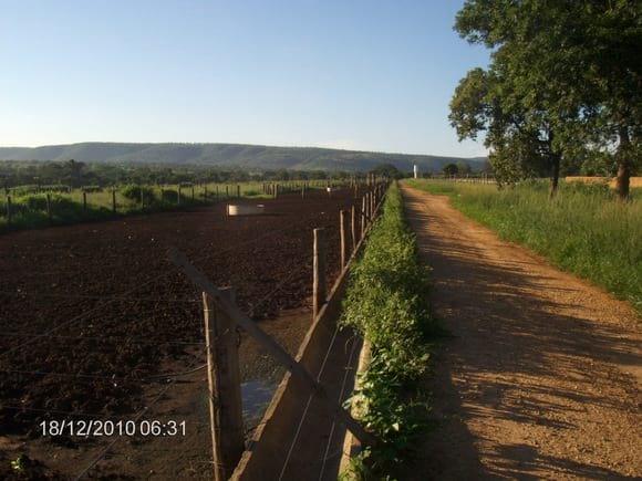 confinamento bovinos região de chuvas de verão - Vários