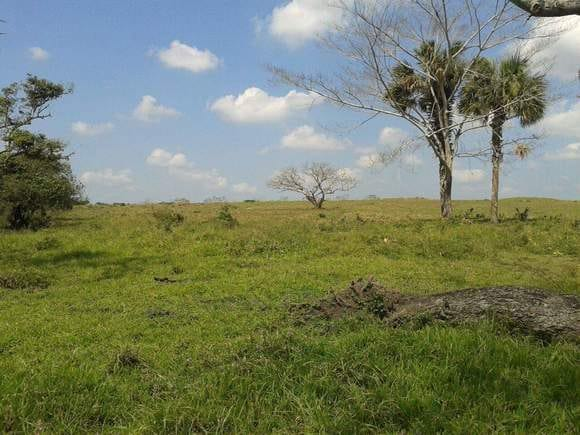 consulta sobre pasto - Varias