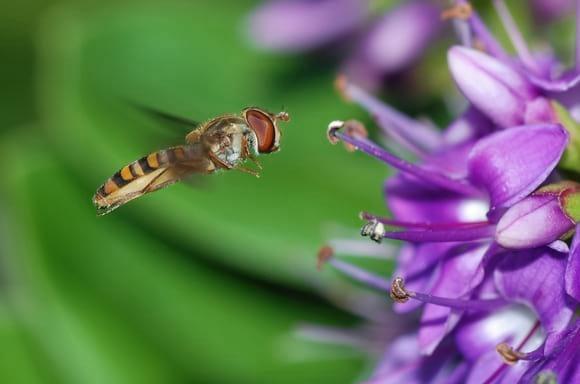Polinizando - Entomología