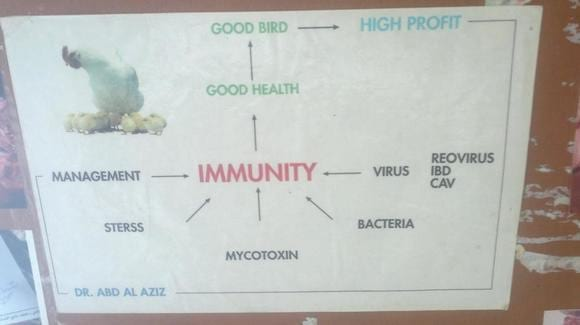 factor affecting immune system of birds -   atlas of my book called  the book  of the avian poultry conslutant