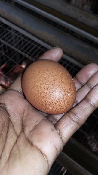 Egg with bloody spot - clinical