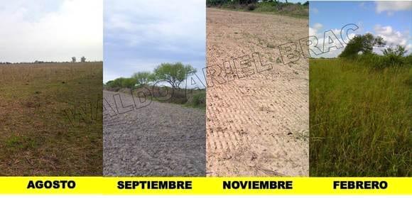 evolución lote sembrado con pasturas subtropicales en el norte de la provincia de Santa Fe. - PASTURAS