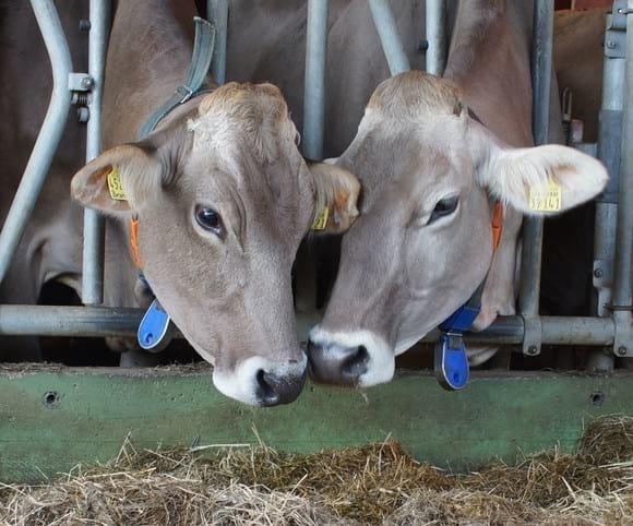 Animal Welfare - Personales