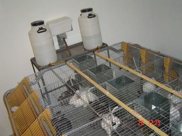 Proyecto enteropatía conejos - Mi actividad