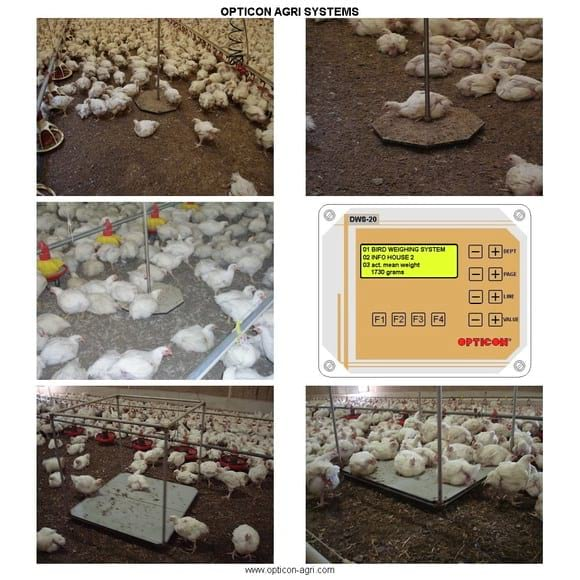 Overview of bird weighing systems - Poultry equipment