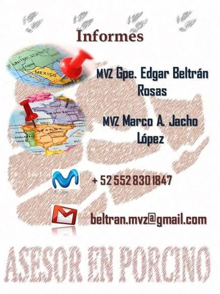Informes - Conferencia ICA