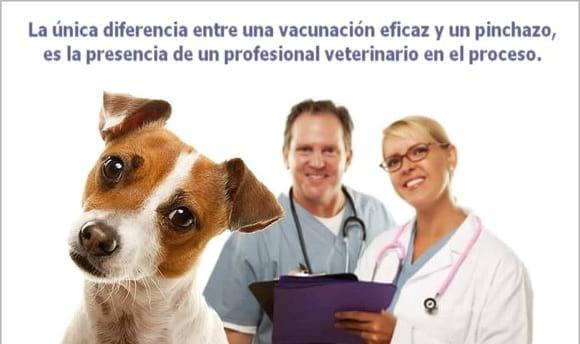 Vacunalos correctamente - Varias