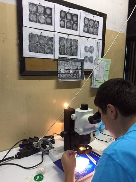 Embryo Stage Observation - My activity