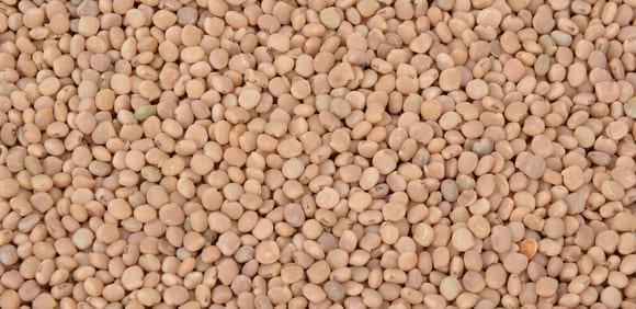Guar seed - Various