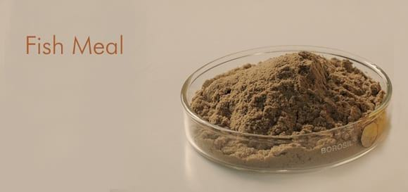Fish Meal For Poultry & Animal Feed - Various