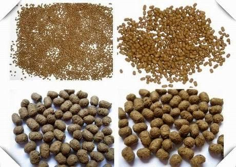 fish feed pellets - Clinical issues