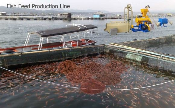 fish feed production plant - Clinical issues