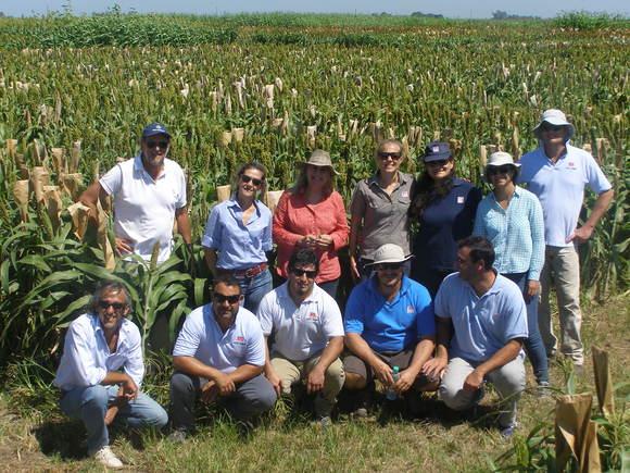 Visita al Criadero INTA EEA Manfredi de profesionales de la Red de Evaluación de Híbridos de Sorgo coordinado por la Ing. Agr. Gabriela Diaz de la EEA. Paraná - Eventos