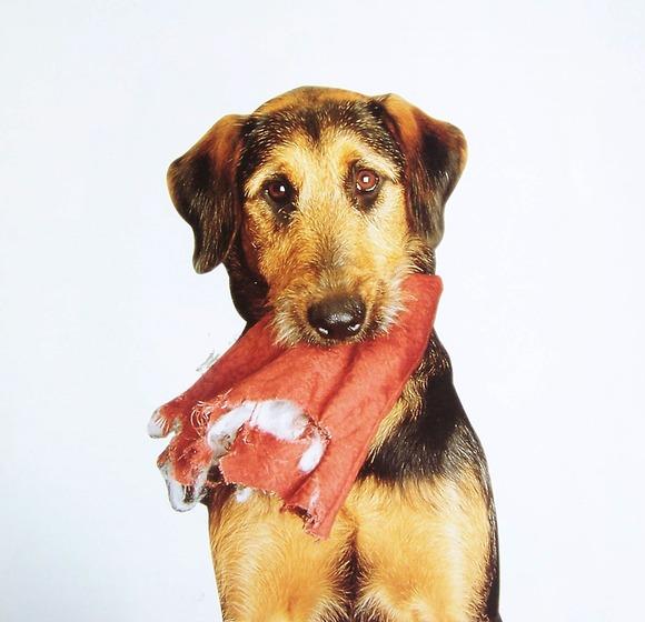 Las mascotas y las fiestas - Bienestar animal