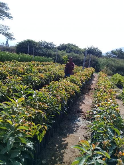 www.agriperia.com - PITAHAYA