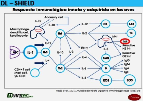 beta-GLUCANOS como Inmunomoduladores - Inmunologia