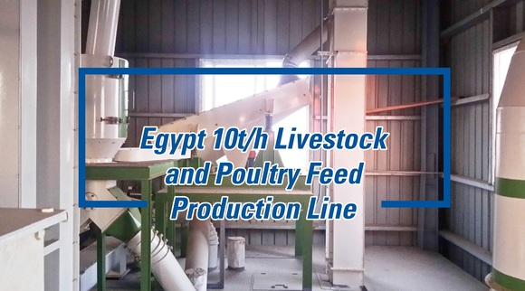 A Safe and Efficient Feed Production Line Built in Egypt - Clinical issues