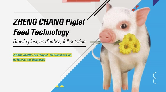ZHENG CHANG Piglet Feed Technology - Clinical issues