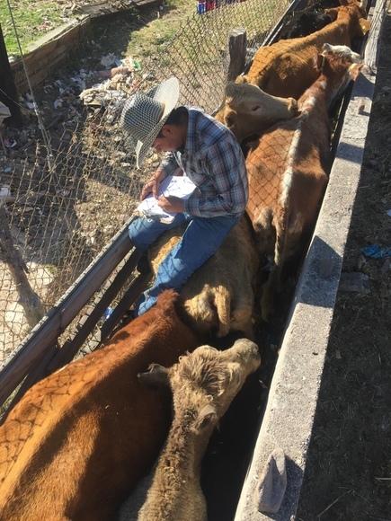 Lectura de identificadores SINIIGA para control de diferentes tipos de manejo - Manejo de ganado