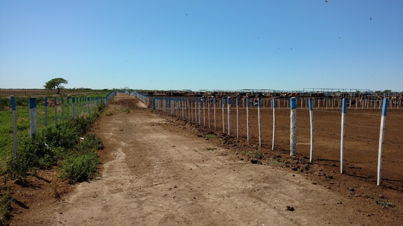 Establecimiento El Duende- Fernández - Santiago del Estero. - Proyecto: Engorde a Corral y Patio de Comidas