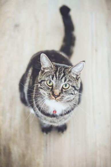Seguro para gatos - Casos clínicos