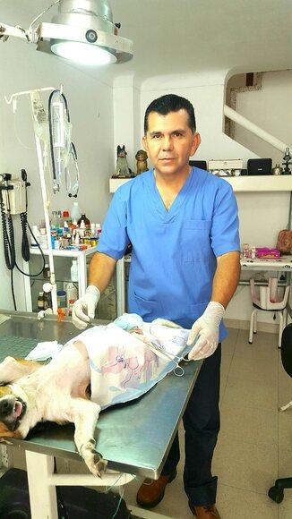 Ovario histerectomía perra - Casos clínicos
