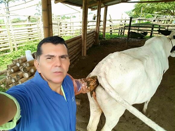 Sincronizando bovinos - Casos clínicos