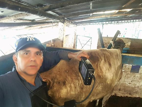 Ecografía en vacas - Casos clínicos