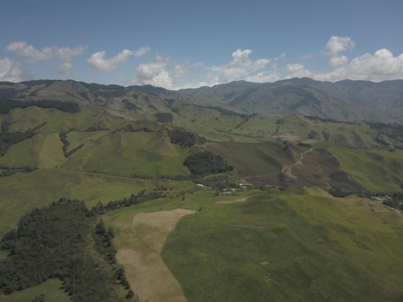 Empresa Ganadería de doble propósito con mejora de pastos con cultivo de papa - fotos ganaderias