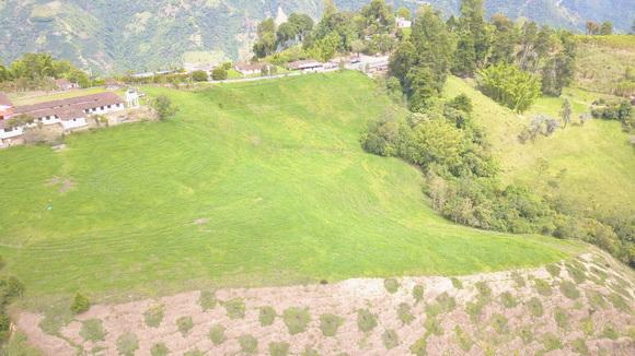 Aguacate Hass y lecheria especializada 2000 msnm - fotos ganaderias