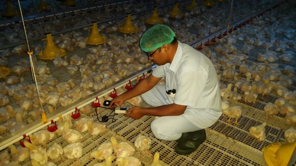 poultry Specialist - Clinical issues