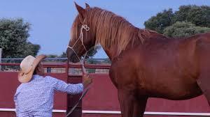 caballos - Mi actividad