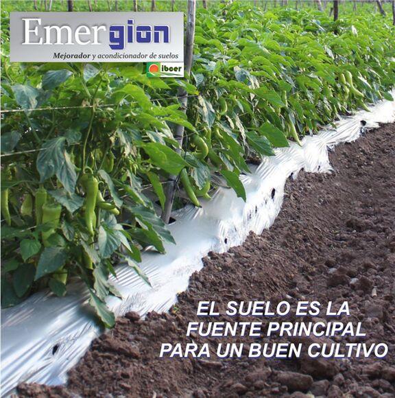 La importancia del SUELO para un cultivo productivo - Productos para Invernaderos y Agricultura