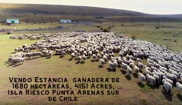 Vendo Campo en el sur de Chile - Mi actividad