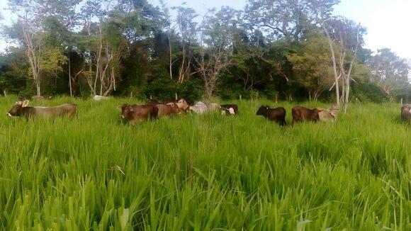 desarrollo de becerros en pastoreo - Casos clínicos