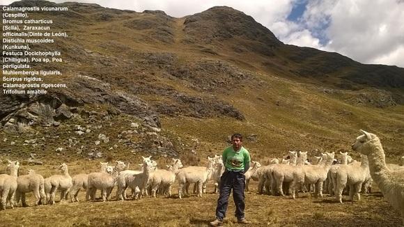 Pastos Naturales Para Alpacas - Varias
