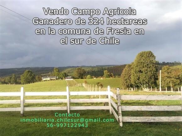Vendo campo ganadero de 324 hectáreas sur de Chile - Mi actividad
