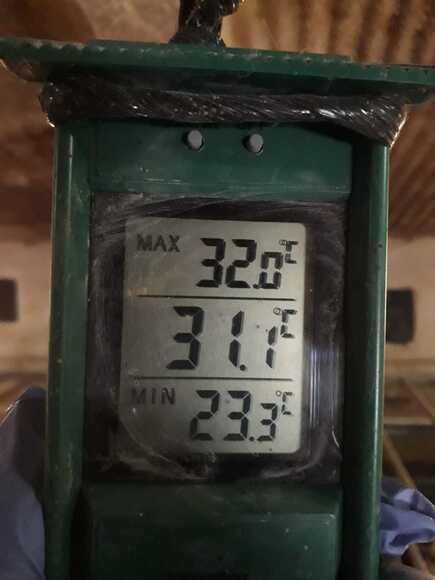 Medición temperatura máx - min - Casos clínicos