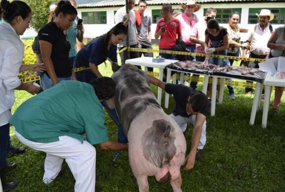 Capacitación en Reproducción porcina_2 - Eventos