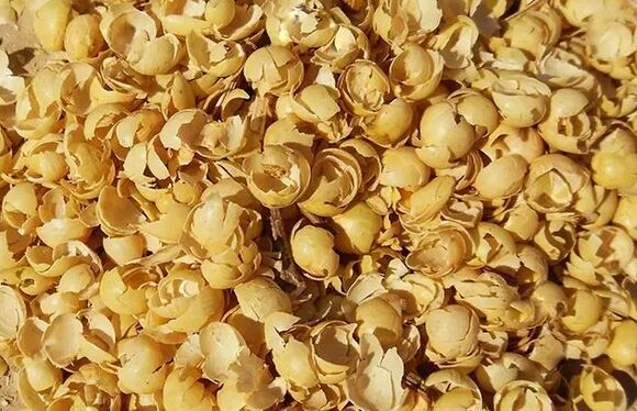 Molasses Bean Skin - Clinical issues