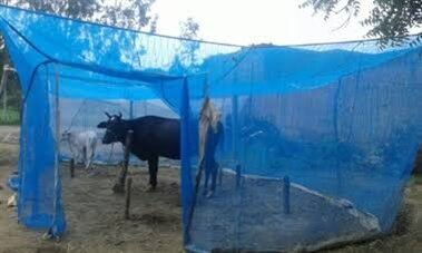 cow nets for protection against mosquitoes and flies - Various