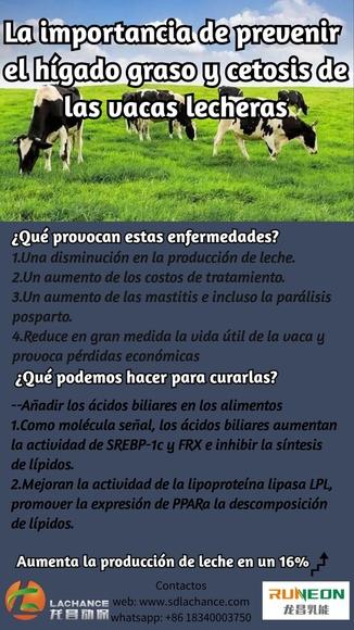 La importancia de prevenir el hígado graso y cetosis de las vacas lecheras - Mi actividad