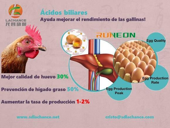 Acidos biliares mejora el rendimiento de las ponedoras - Eventos