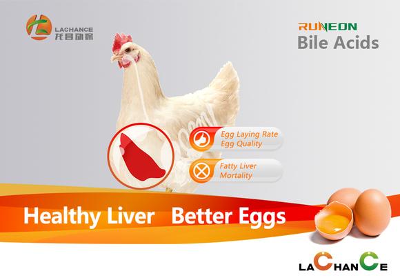 Los ácidos biliares se centran en proteger la salud del hígado y reducir la mortalidad de las ponedoras - Casos clínicos