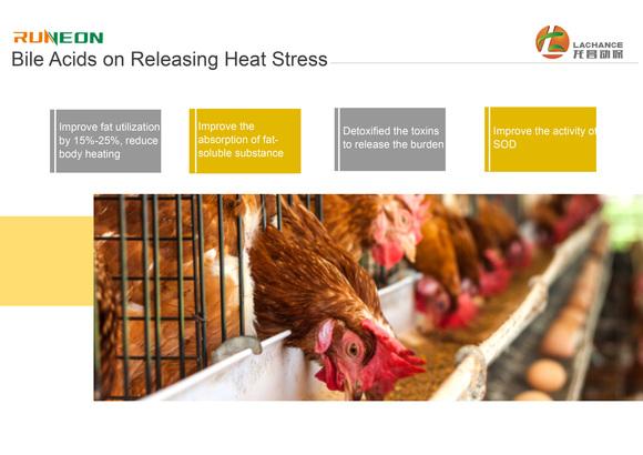 Los ácidos biliares pueden mejorar la capacidad anti-estrés. - Casos clínicos