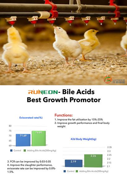 Los ácidos biliares son el mejor promotor del crecimiento de los pollos de engorde. - Casos clínicos